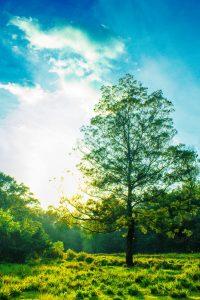 strom, detox, zelen