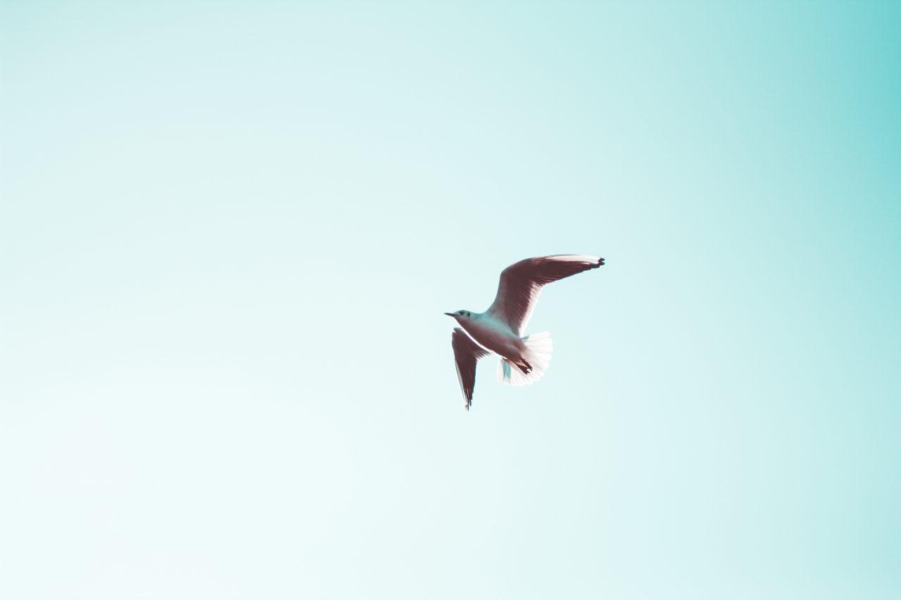 vtak, volny, letiet, obloha