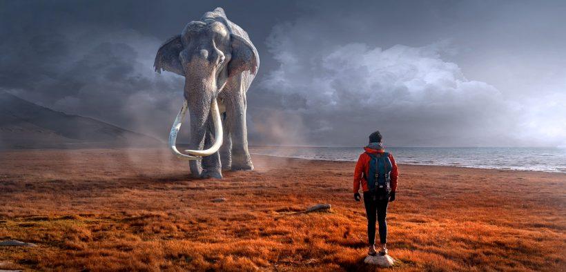 slon jazdec