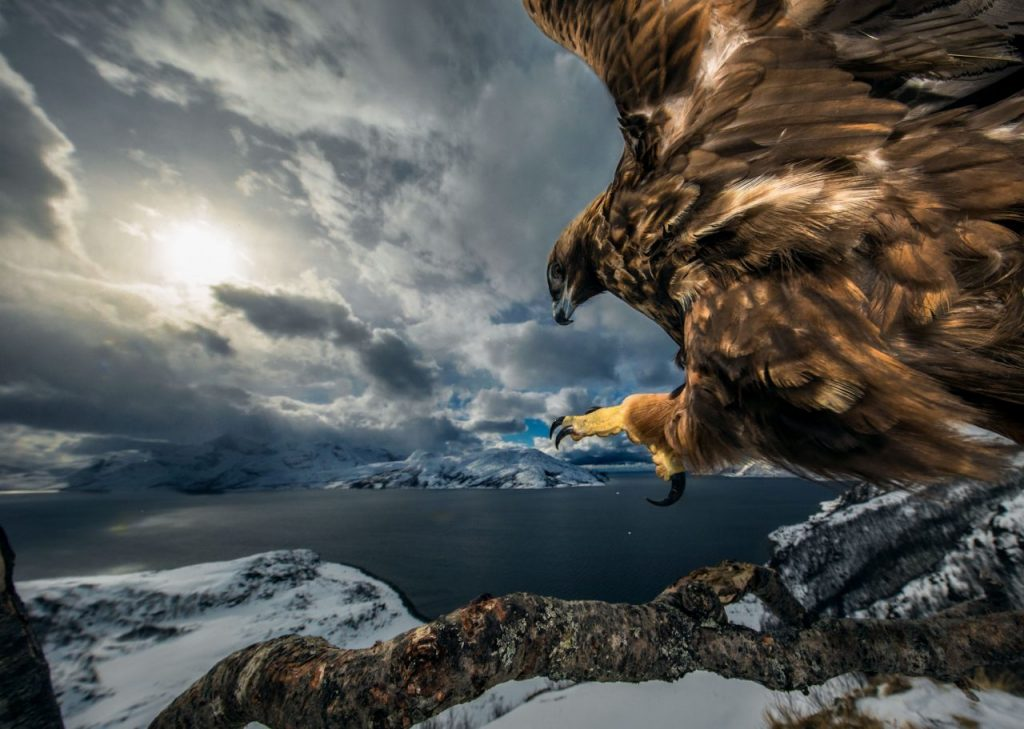 wildlife photography of the year