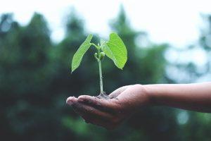 ekológia, aplikácie